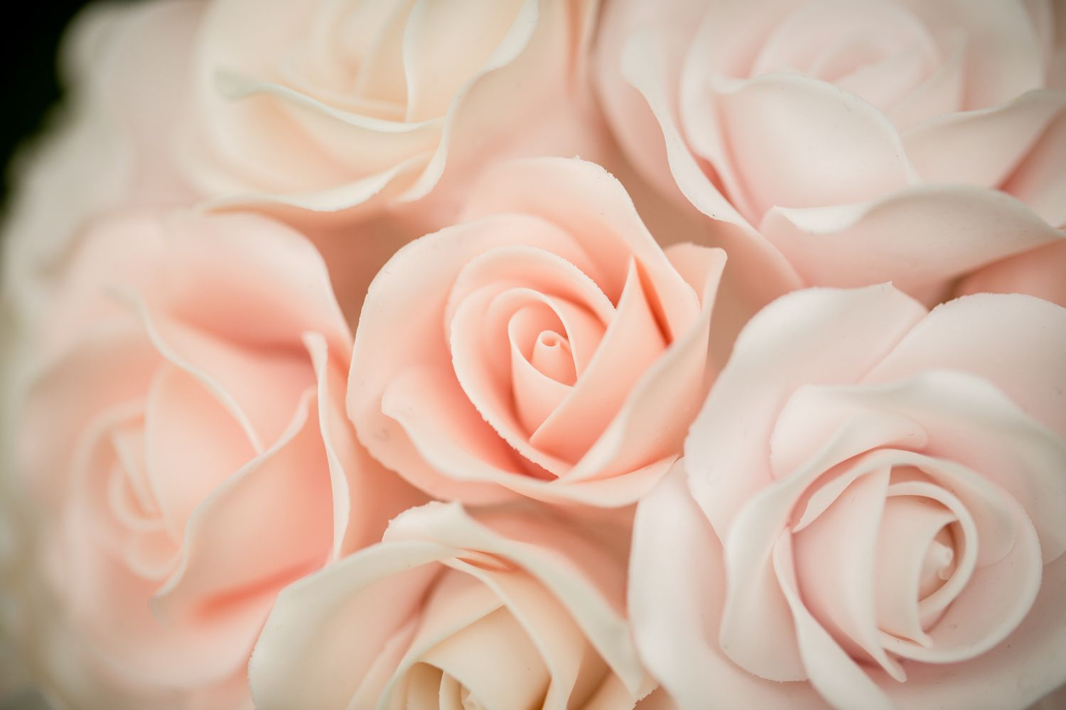Roses || Photo by Eppel Fotografie