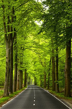 Green Road Wallpaper Wall Decor Beautiful Landscape Wallpaper Landscape Wallpaper Beautiful Places Nature