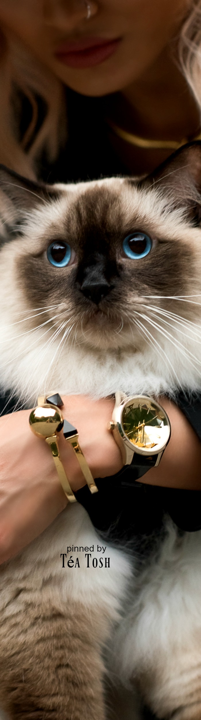 Téa Tosh Micah Gianneli Karl Lagerfeld Ragdoll Choupette