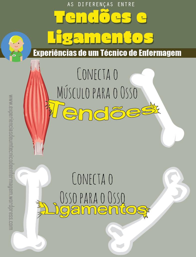 Tendões e Ligamentos: As Diferenças | Biología, Medicina y Anatomía