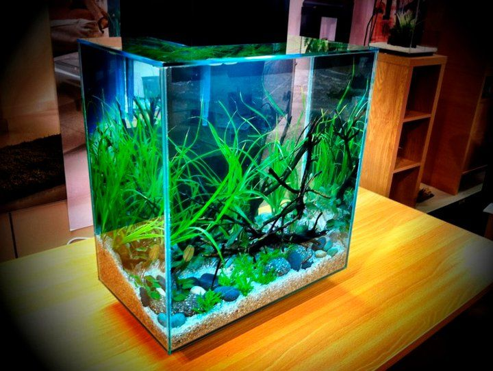 Fluval Edge 46L Nice Setup   Fluval Edge Aquarium   Pinterest   Aquariums and Fish tanks