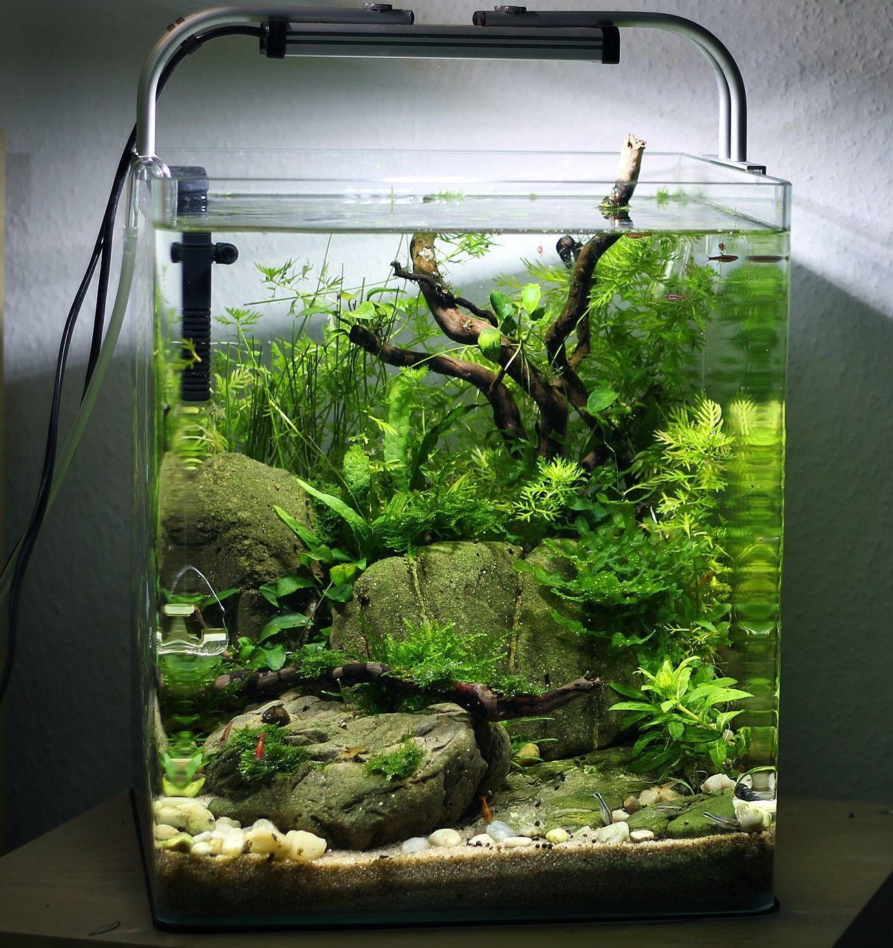 Tropicalfishfreshwater tropicalfishaquariumideas for Vivero para peces