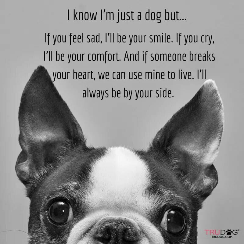 """♡ Oh, but you're never """"just a dog"""", sweet baby.  You are a furbaby family member."""