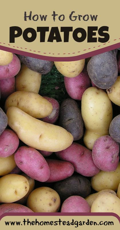 How to Grow Potatoes - The Homestead Garden