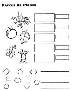 Dibujo de actividad sobre plantas para colorear y for Como crecen los arboles para ninos