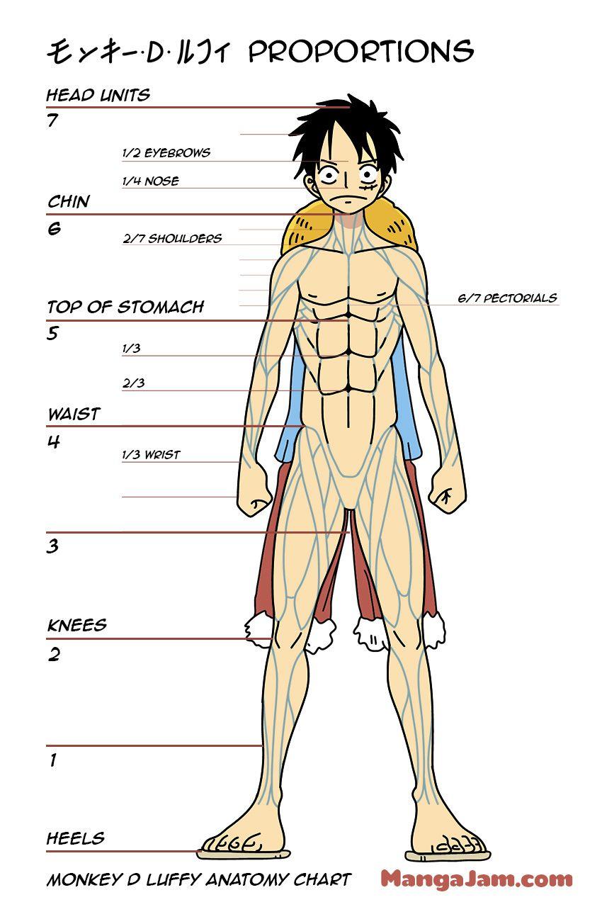Luffy Body Proportions Anatomy One Piece Drawing Body