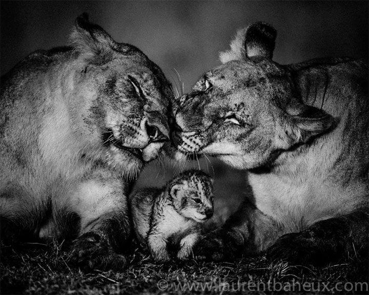 image animaux sauvage noir et blanc