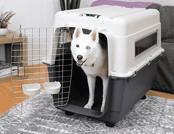 12 Best Large Dog Kennels For Your Big Dog Dog Travel Crate Plastic Dog Kennels Dog Crate