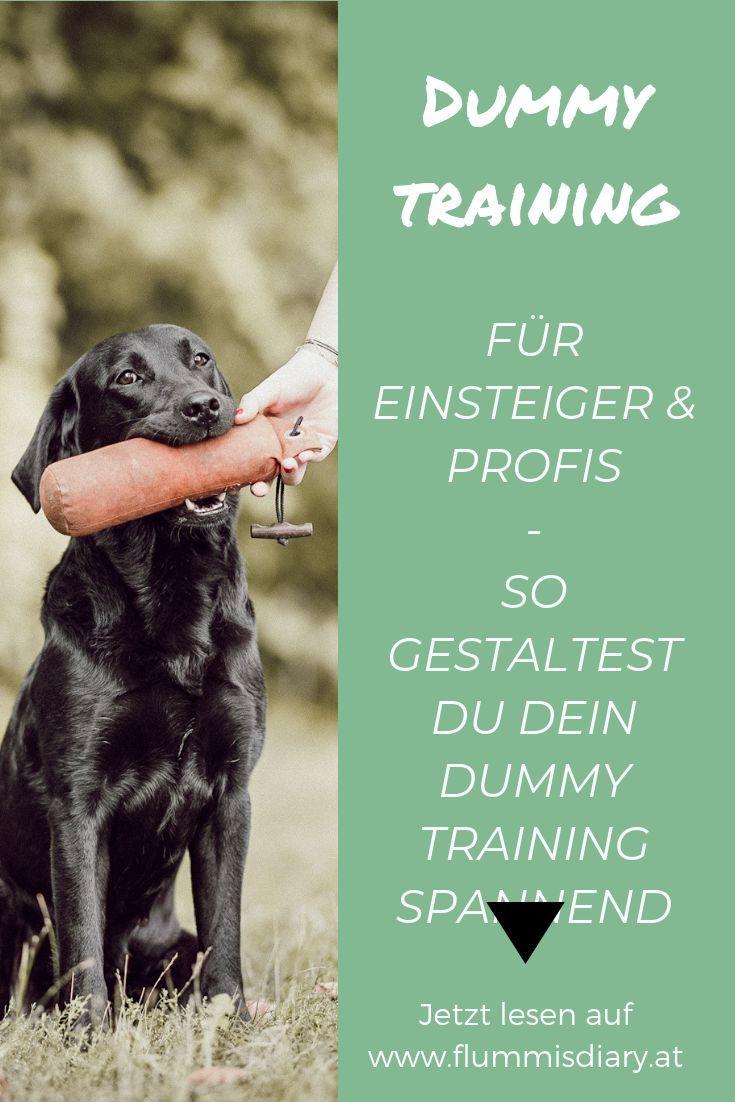 Dummytraining Anleitung Fur Anfanger Fortgeschrittene Flummi S Diary Hund Beschaftigen Hundesport Hundeausbildung