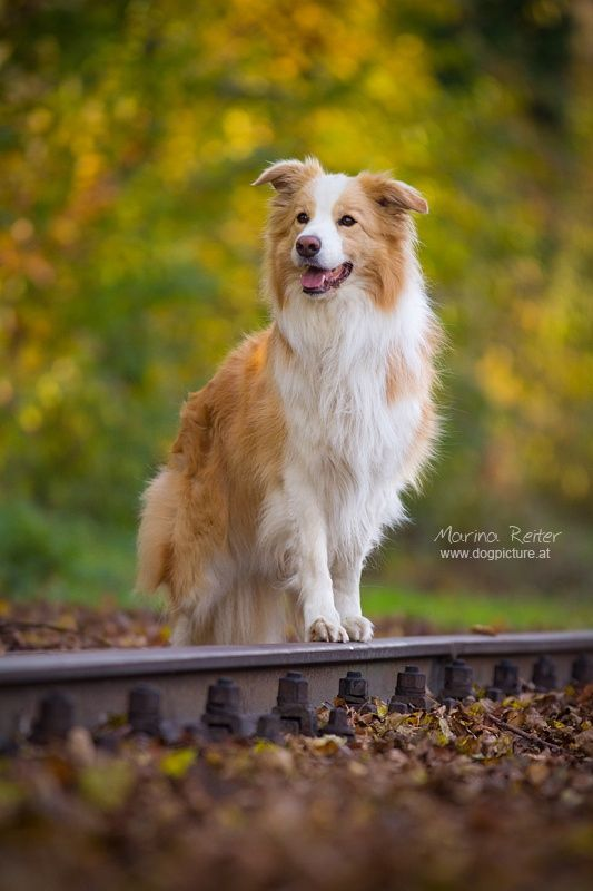 Border Collie Goes On Tour By Marina Reiter On 500px