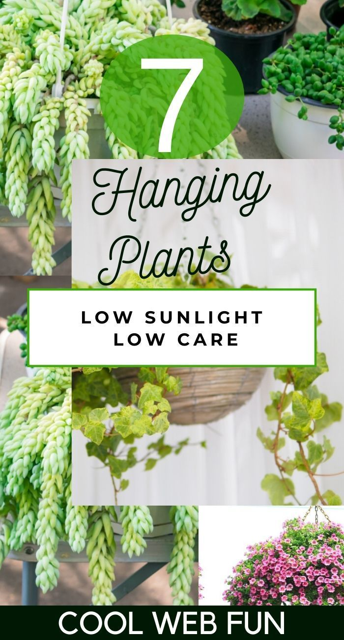 7 Best Indoor Hanging Plants with Low Maintenance