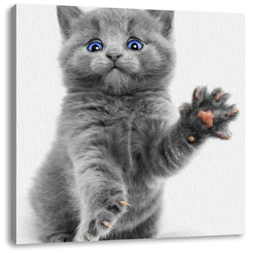 Little Russian Blue Cat Photographic Print On Canvas East Urban