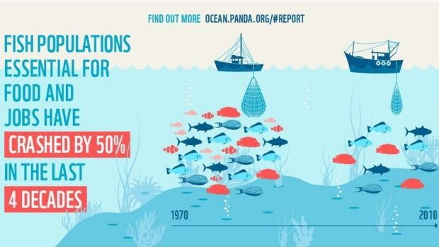 WWF: Nearly Half the World's Marine Animals Have Been Wiped Out in Last 40 Years. A scale of the decline in marine life from 1970 to 2010. (photo: WWF)