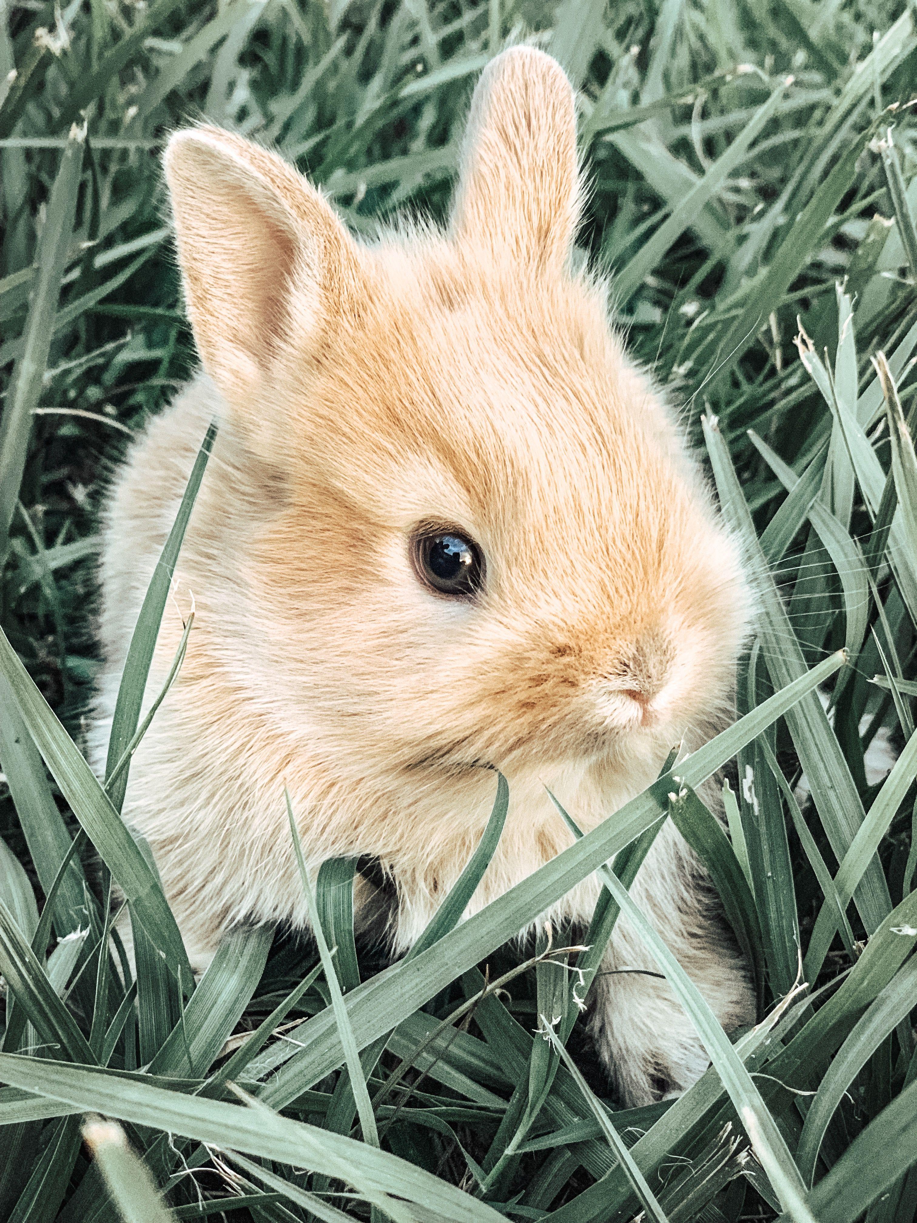 Картинки с милыми очень кроликами