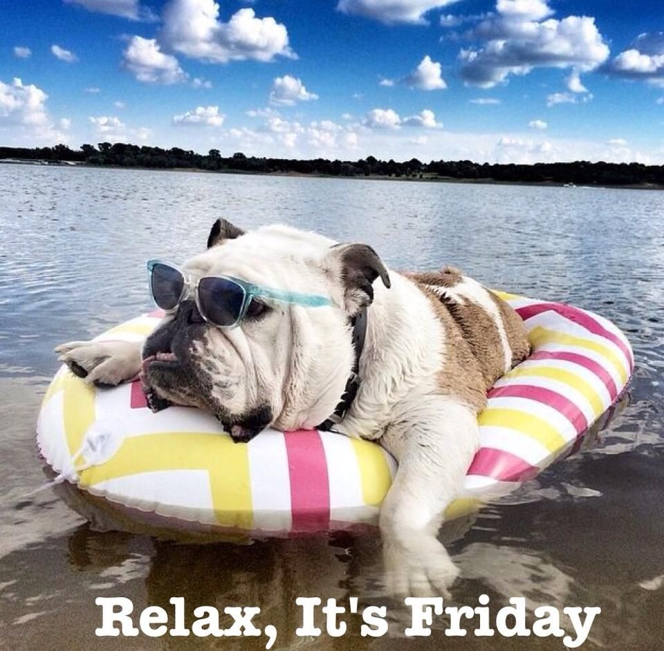 Happy Friday With Images Bulldog Puppies Bulldog English Bulldog