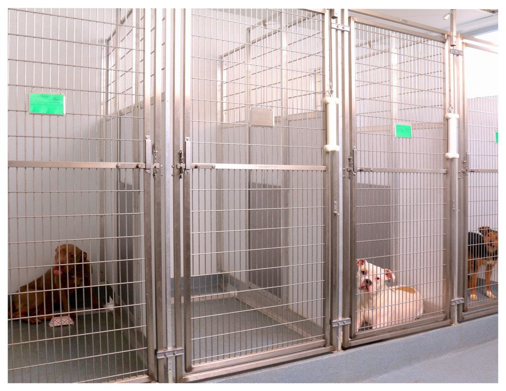 Dog Ward Hospital Design Dog Kennel Designs Dog Hotel Dog