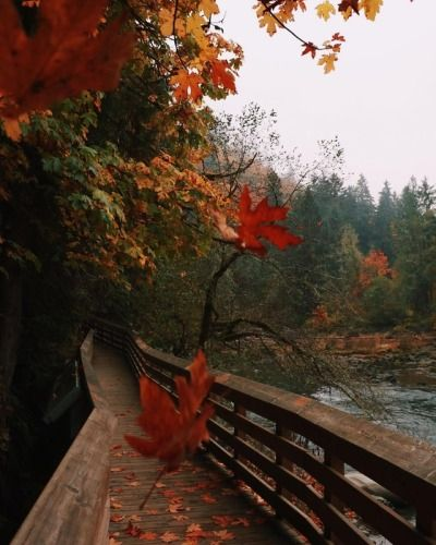 autumn Autumn cozy, Autumn photography, Fall pictures