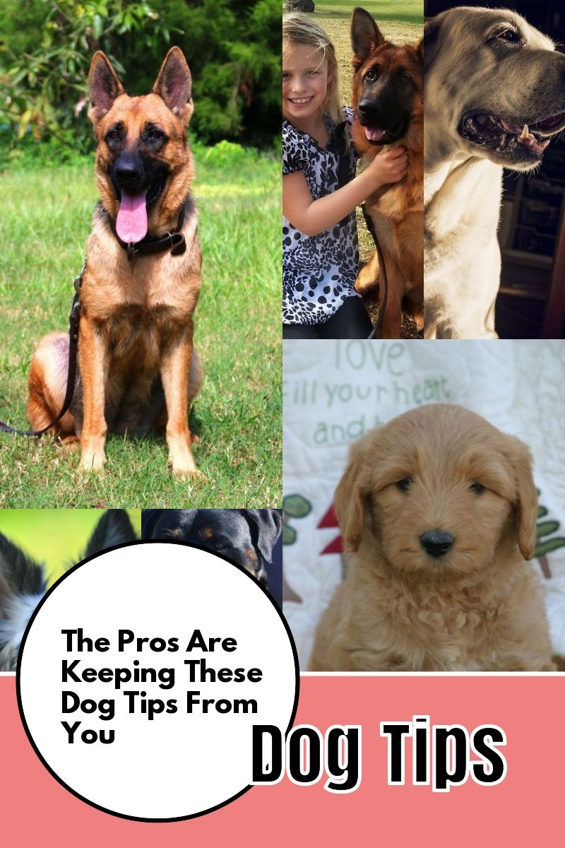 Free Expert Advice On The Topic Of Dogs Dogs Dog Training Dog Care