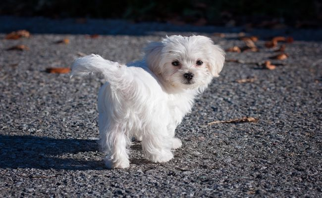 12 Adorable Cutest Small Dog Breeds In The World With Images