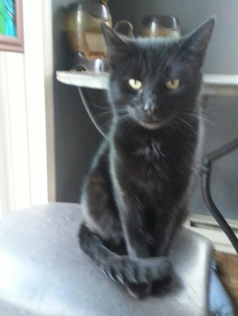 Adopt Baby Boo On Petfinder Pets Cat Adoption Pet Adoption