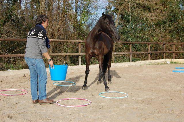 Cuando interactuamos con caballos, comprendemos más fácilmente, el signficado de liderazgo. Nos dan la posibilidad de vernos en acción y ver que sucede, convirtiéndose en un escenario de la vida misma.