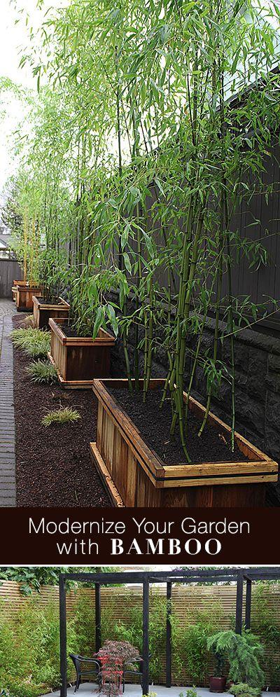 Modernize Your Garden With Bamboo   Bamboo garden, Growing ...