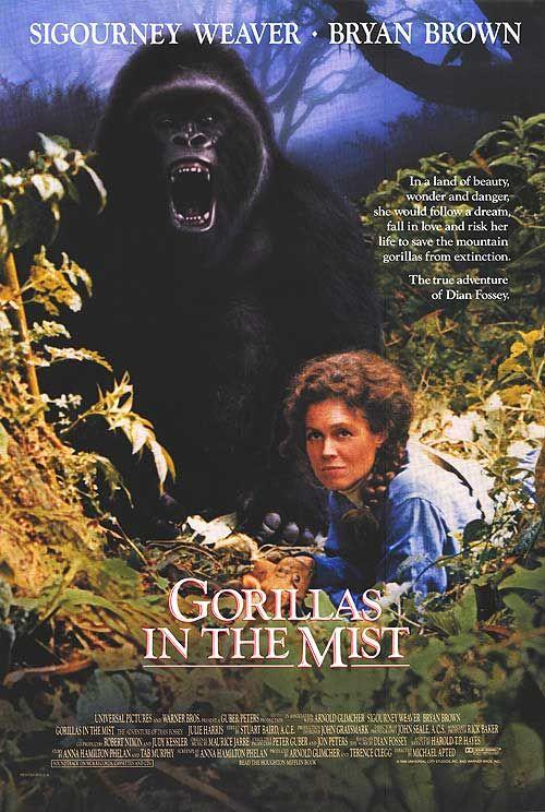 ORIGINAL INTERNATIONAL MOVIE POSTER 1988 GORILLAS IN THE MIST ROLLED