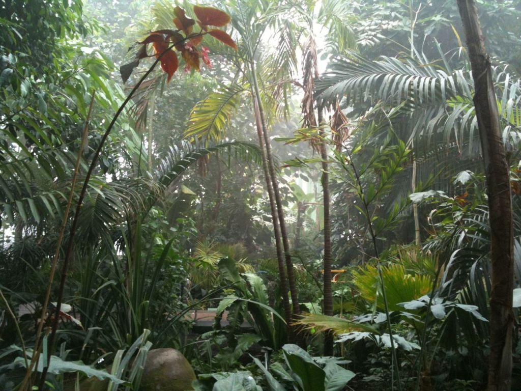 plantes exotiques dans les serres du jardin des plantes de paris moro num paris tropical. Black Bedroom Furniture Sets. Home Design Ideas