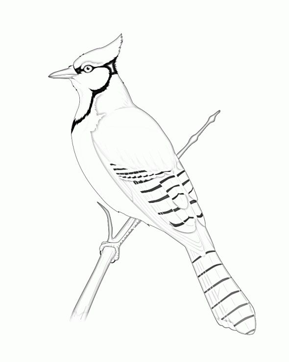 Pin By Think W Ur On Bird Templates Bird Coloring Pages Blue Jay Bird Bird Template
