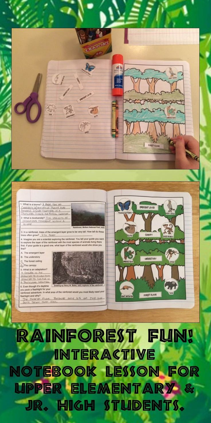 Science interactive notebook rainforest biome adaptation