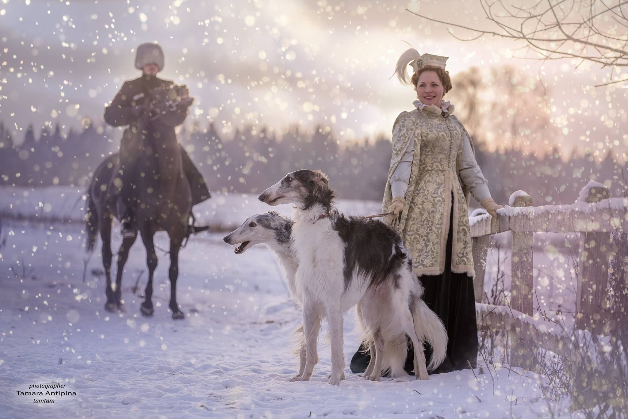 Pin By Dawn Groves On Russian Russian Wolfhound Borzoi Hound Breeds