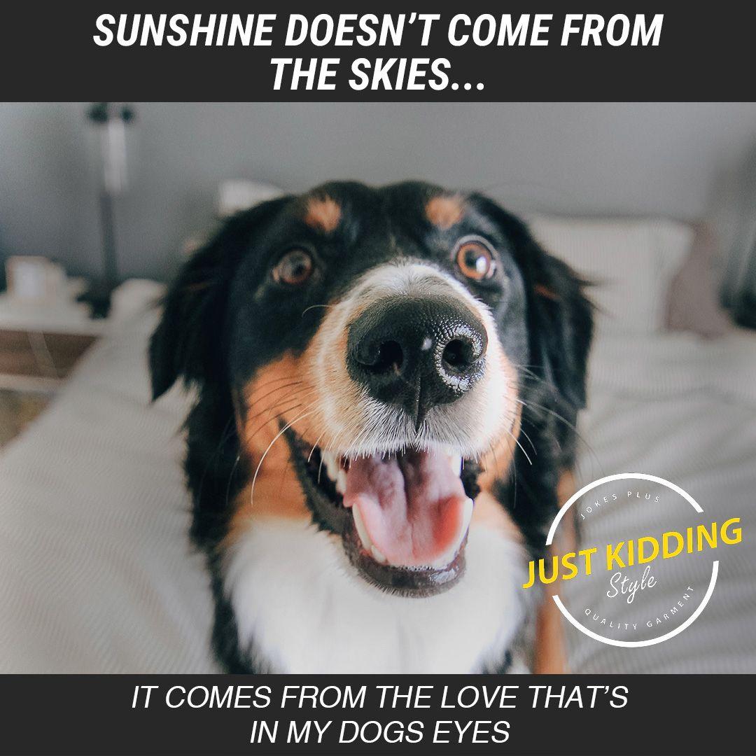 Funny Dog Memes Funny Dog Videos Funny Dog Videos Memes Funny Dog Memes Puppies Funny Dog Memes Clean Funny Dog Memes Funny Dog Memes Funny Dogs Dog Memes