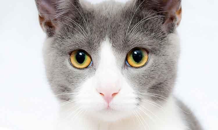 100+ Gambar Cerita Hewan Kucing Terbaik