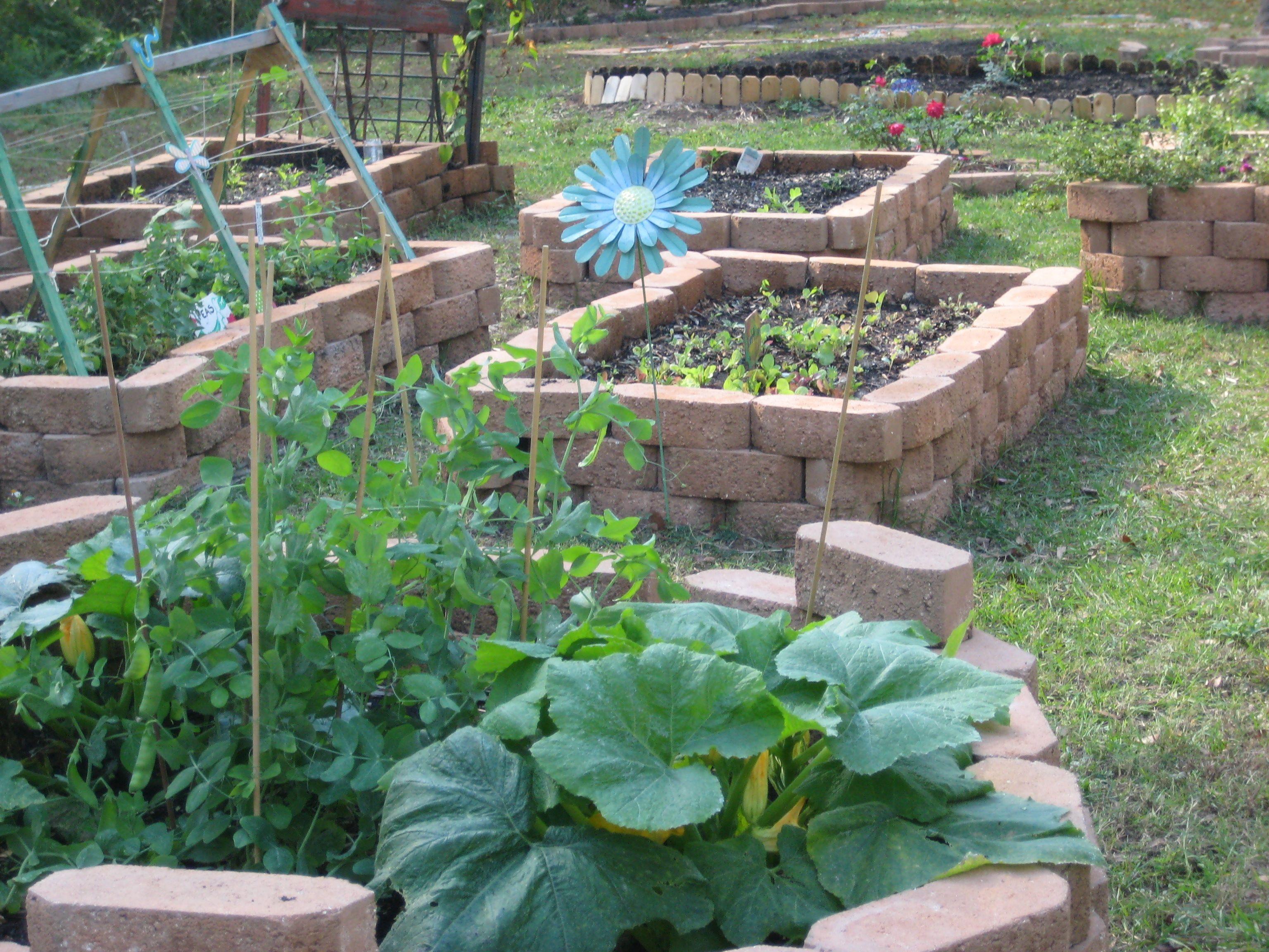 Urban School Garden Pictures Gallery