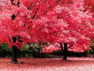 Fonds D Ecran Gratuits Sur Pc Astuces Belle Nature Paysage Automne Fond D Arbre