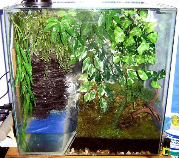 Tree Frog Terrarium Setup Also For Green Tree Frogs Red Bellied
