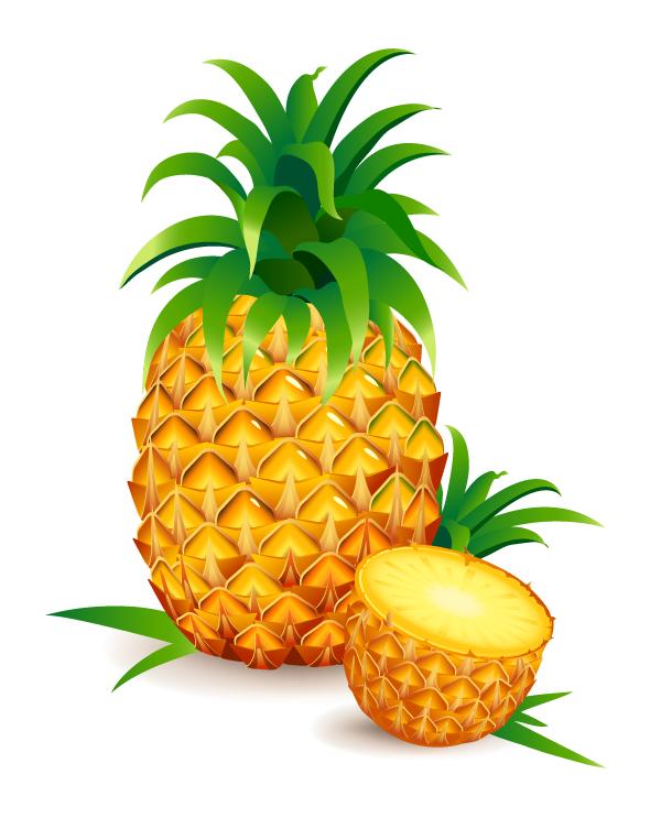 Pineapple realistic. Vector fuente frutas y