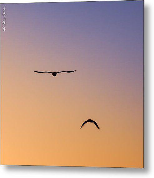 Flying Birds Metal Print By Alexander Fedin
