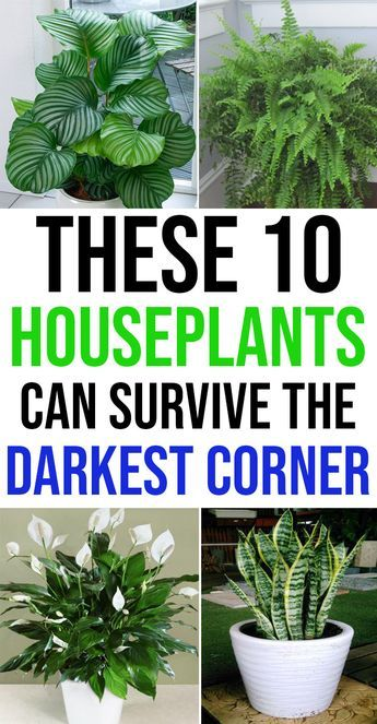 10 Houseplants That Can Survive Darkest Corner of Your House -   15 plants Room houseplant ideas