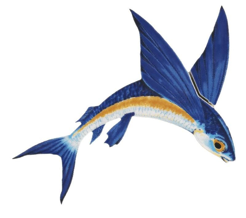 Flying Fish Meaning Google Search Tattoos In 2018 Pinterest