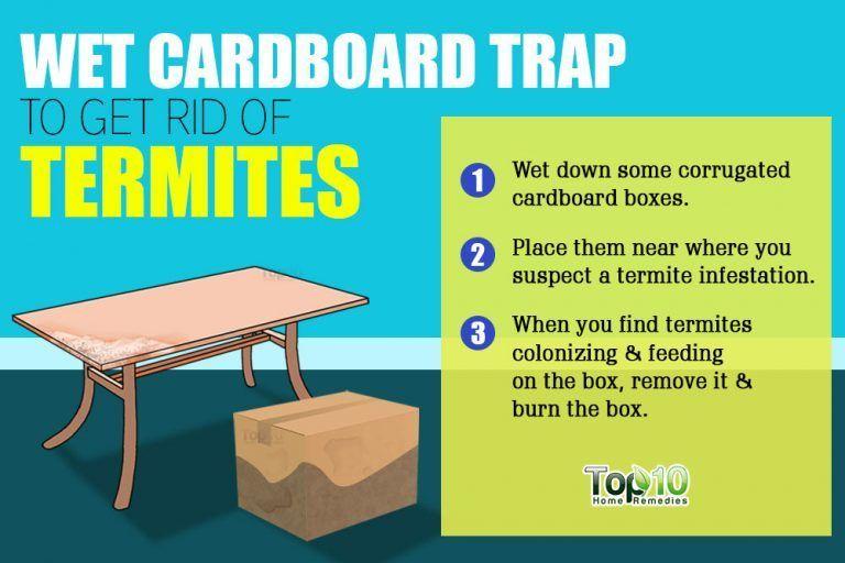 wet carboard trap for termites Termite control, Termite