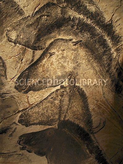 C0097646-Stone-age_cave_paintings,_Chauvet,_France-SPL.jpg (398×530)