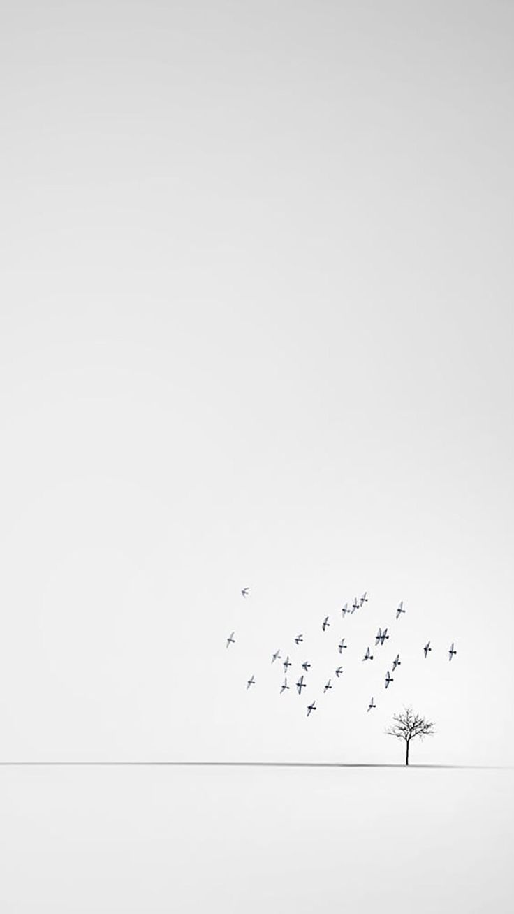 Iphone Wallpapers Quotes Iphone Minimalistic White Wallpaper Quotesiphonewallpapers Quote Iphone Blanc Fond D Ecran Minimaliste Fond D Ecran Telephone