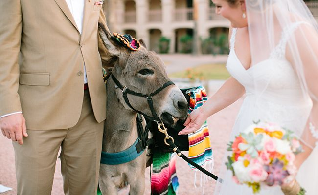 7 Reasons Why Having A Donkey At Your Wedding Is A Great Idea | Photo by:  Vienna Glenn Photography | TheKnot.com