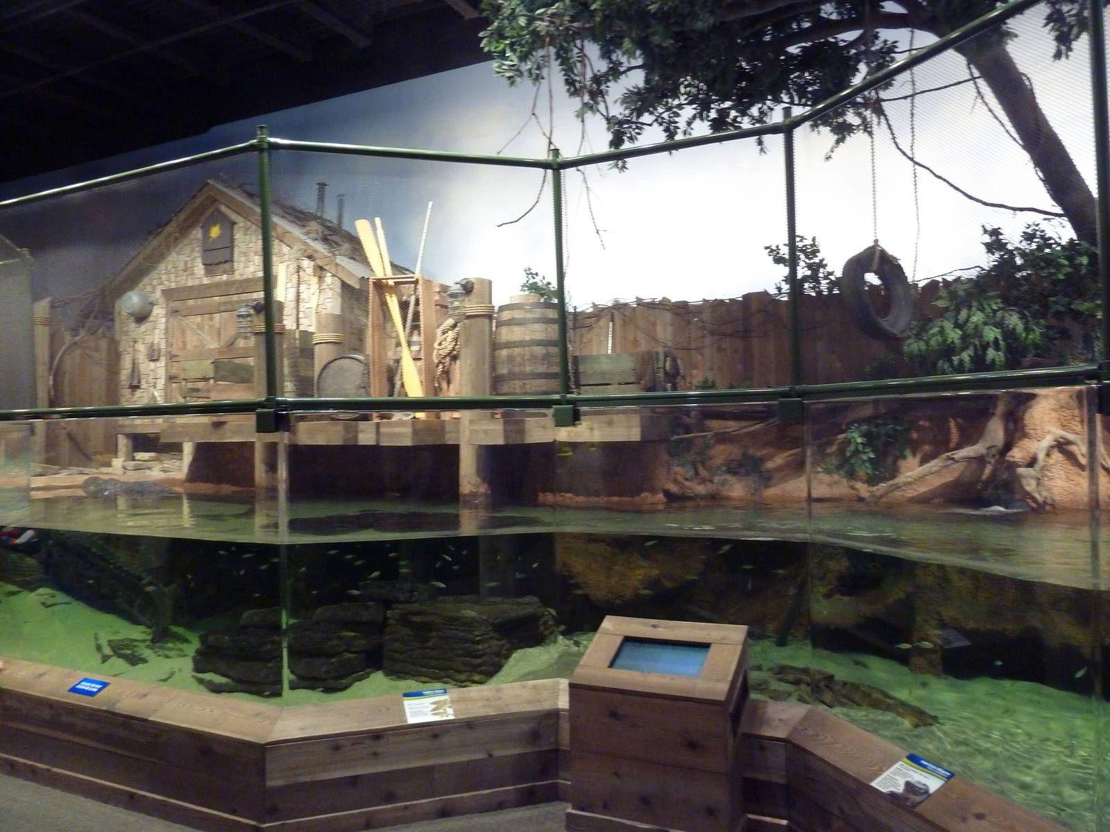Bayou Style Aquarium With Images