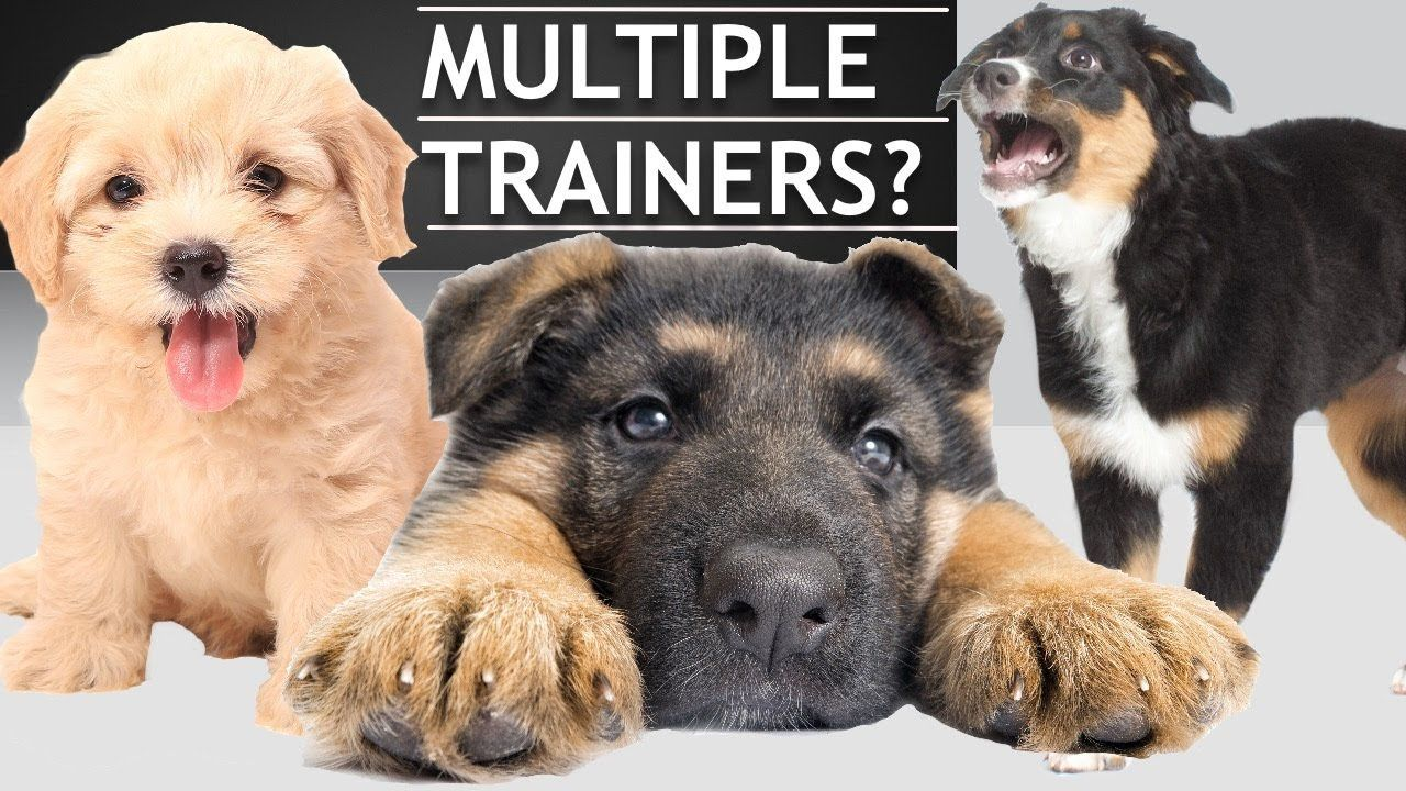 How To Train A Dog When You Live With Other People Youtube