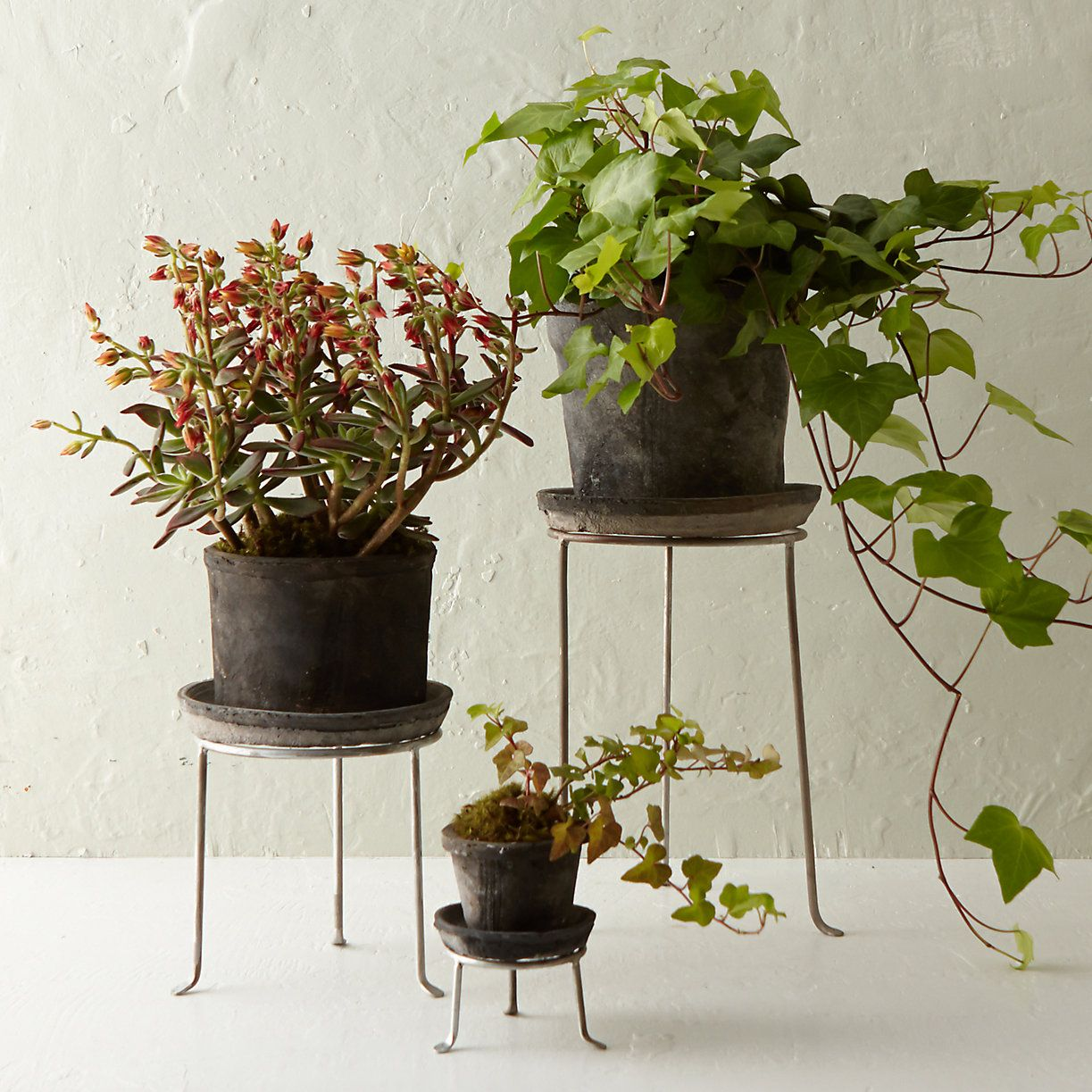 Silver Footed Tall Plant Stand Terrain With Images Tall