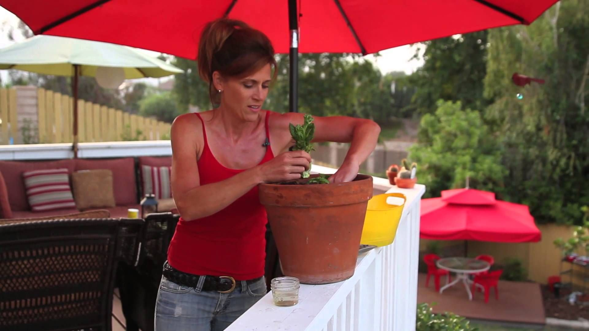 How to replant lettuce from the store never throw away - How to store lettuce from garden ...