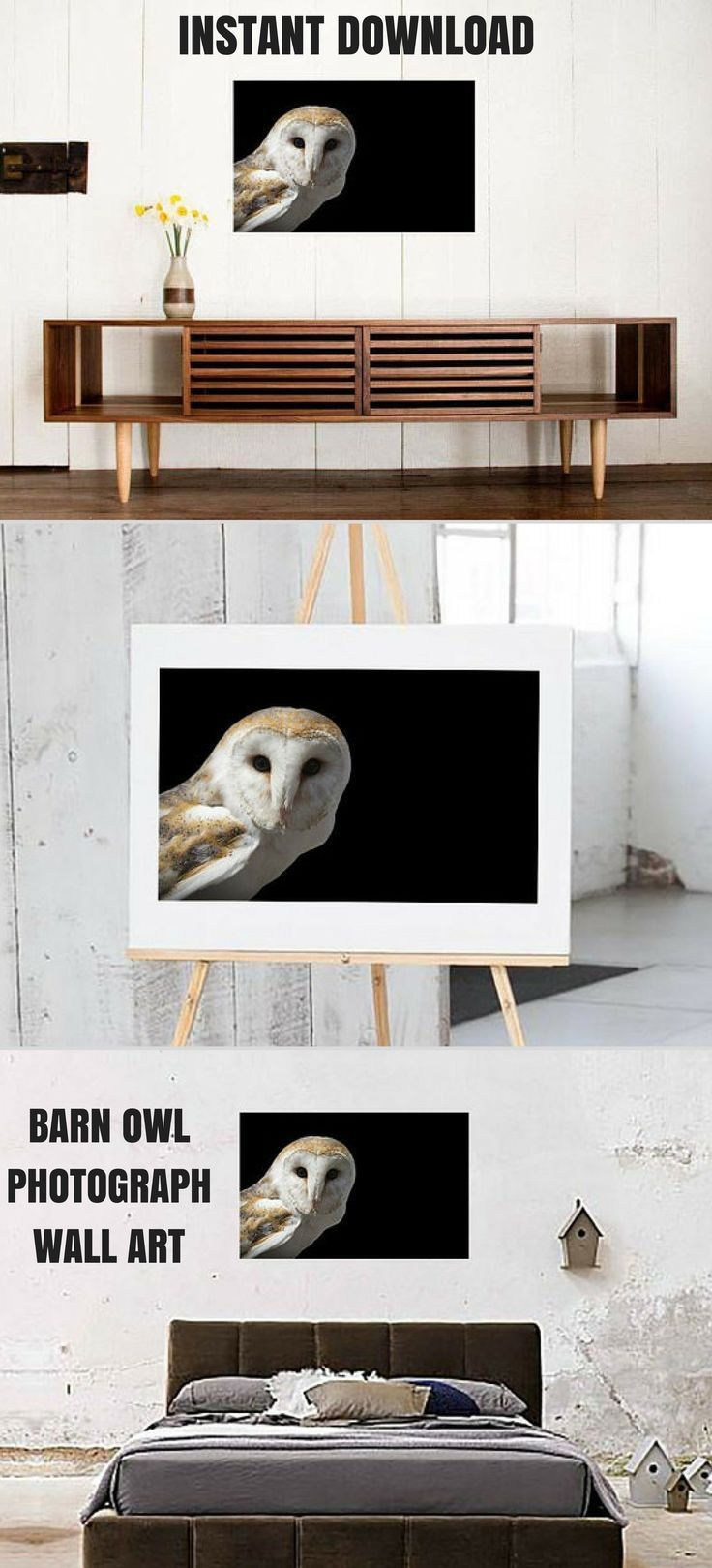 Owl Photograph Wall Art, Owl Print, Barn Owl, Wildlife Decor, Owl Decor, Bird, Outdoor Wildlife Nature Photo, Instant Download Printable