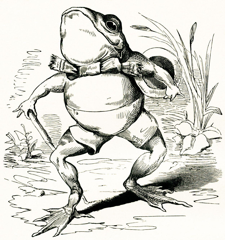 Vintage Illustrations Garden Frog